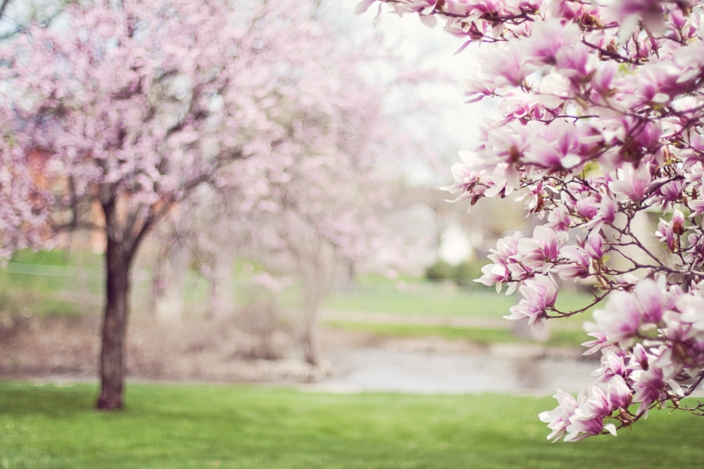How to prepare for spring allergies - Family Allergy and Asthma