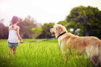 Child walking dog in field